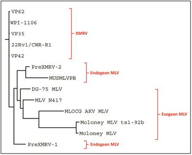 Fylogenetische stamboom